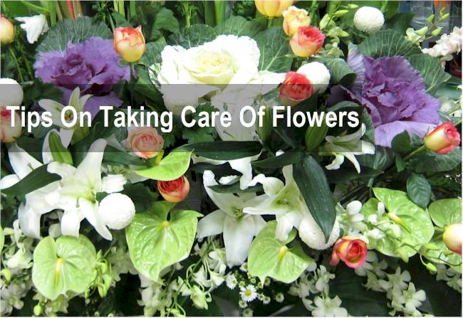 tips on flower care