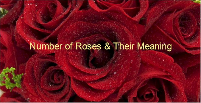 number of roses and the meaning