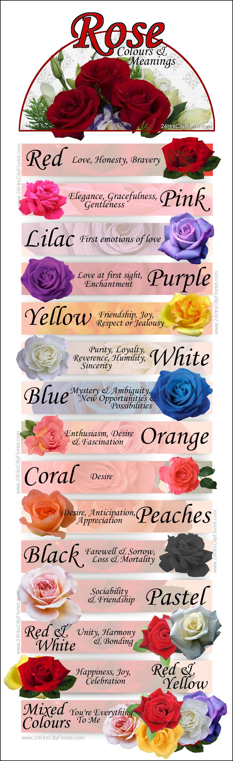 Rose Colours & Meanings