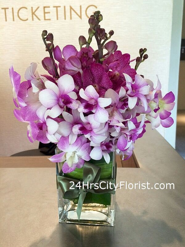 orchids-purple