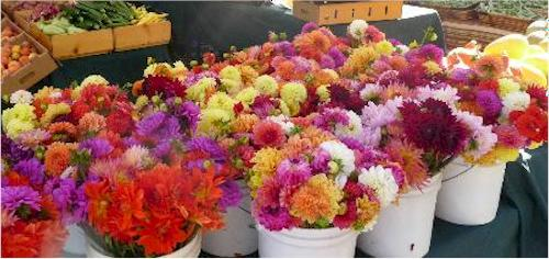 variety of flowers for delivery