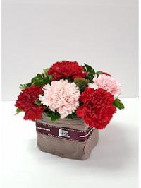 Mini Carnations Arra..