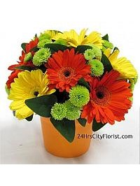 Florist Delivery - S..