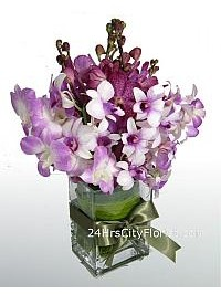 Royal Purple Orchids..