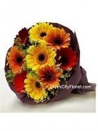 Colour Gerbera..