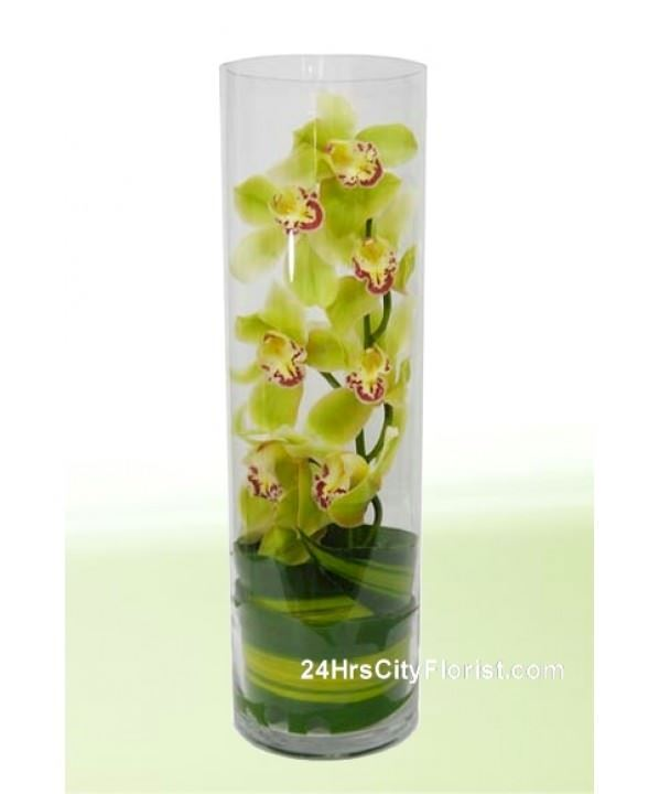 cymbidium in glass vase